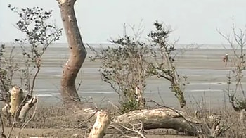 Video : Adani port: Damaging the coast