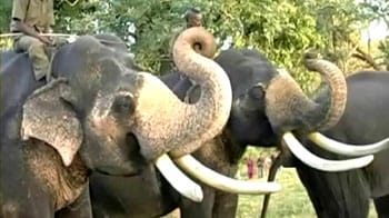 Video : Celebrating Pongal with the Jumbo in Tamil Nadu