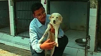 Video : Some hope for stray dogs