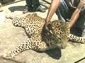 Video : Tragic year for wildlife conservation