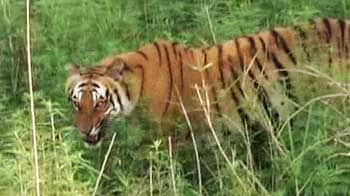 Video : Top tiger conservationists get together to save the tiger