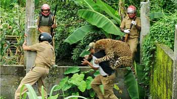 Video : Caught on camera: Leopard attacks forest guard