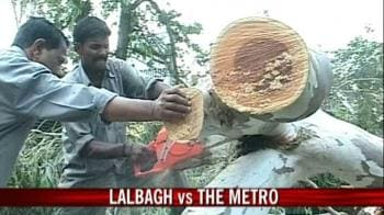 Video : It's tree lovers vs Bangalore Metro authorities