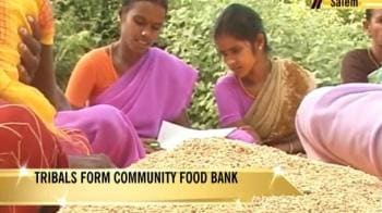 Video : Tribals bring grain revolution