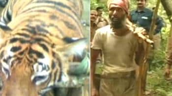Video : Wildlife crisis: 3 animals killed in one week