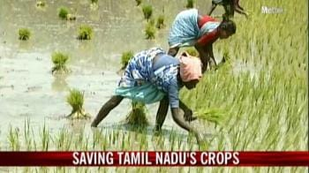 Video : Saving Tamil Nadu's crops