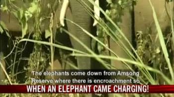 Video : When an elephant came charging?