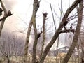 Video : J&K: Encounter in Pulwama, one jawan injured