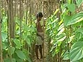 Video: POSCO site: Tribals trying to prove their existence