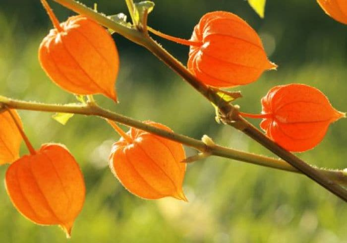 10 Things You Didn't Know About Ashwagandha