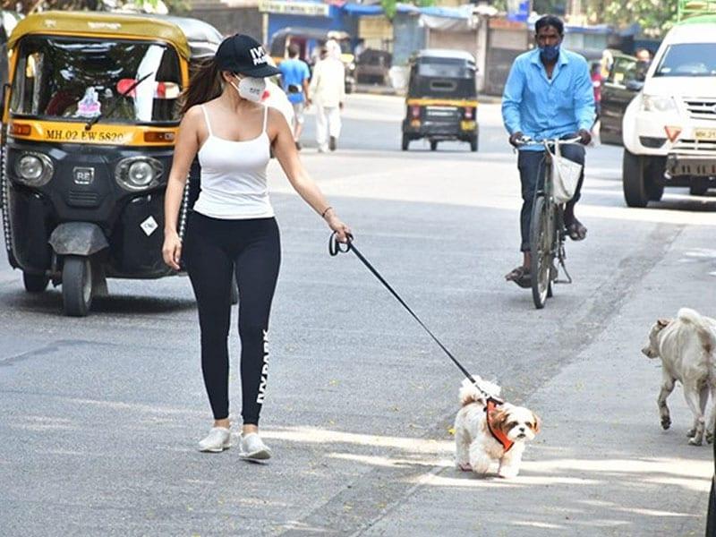 Photo : सोफी चौधरी अपने पेट डॉग के साथ आईं नज़र