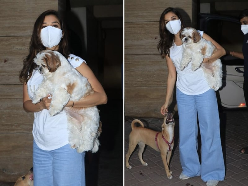 Photo : Spotted: Sophie Choudry With Her Adorable Pet Pooch And New Furry Friend