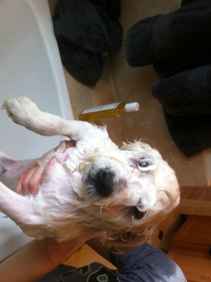 Zuckerberg's dog destroys his bathroom