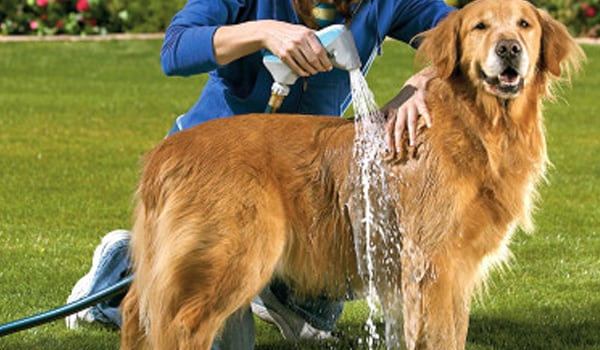 Do not have close contact with pets. Pet owners should bathe their pet weekly.