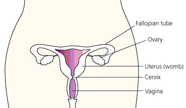 Cervical cancer is a disease caused by the abnormal growth and division of cells that make up the cervix (the portion of the uterus attached to the top of the vagina). Women with multiple sex partners and those who have already been infected with HPV or HIV are at an increased risk of cervical cancer.