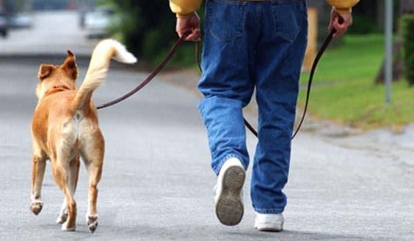 Cat leash training tips
