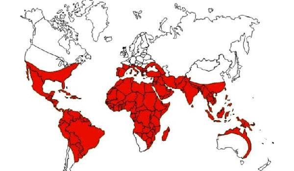 Each year tens of millions of people are affected by the disease. The highest incidence of dengue is in Southeast Asia, India and the American tropics where Aedes aegypti can be found.