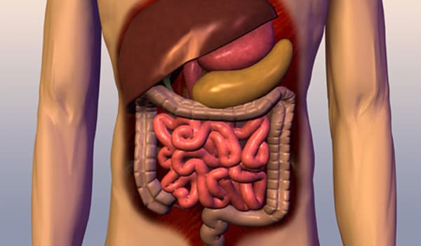 Increases the efficiency of the digestive system, which may reduce the incidence of colon cancer.