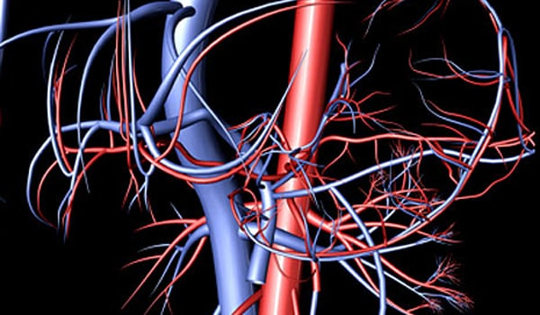 Enlarges the arteries (blood vessels) that supply blood to the heart.