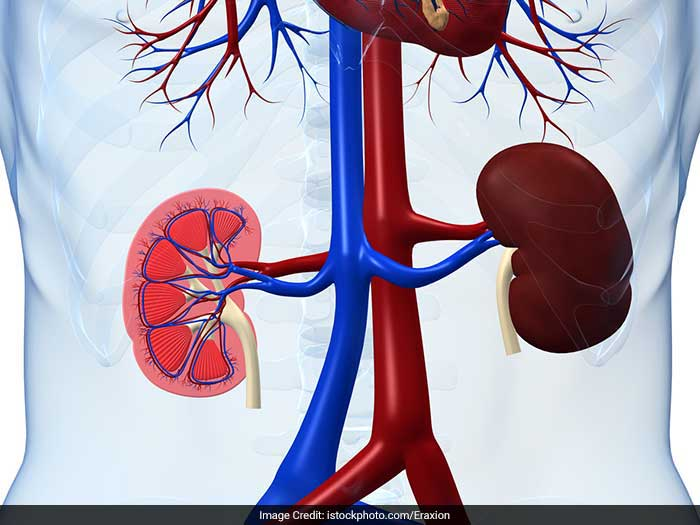 Damage to the kidneys almost invariably leads to high blood pressure.