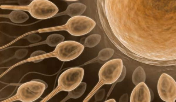 In fertile quality cervical fluid, sperm can survive for up to five days in a woman
