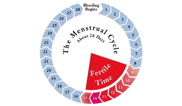 Ovulation generally, NOT necessarily occurs 14 days before the next expected menses. Therefore, it is crucial for you to note your cycle length, because you cannot calculate your fertile period from day 1 of current menses. Therefore, if you have regular cycles of 28 days, you will ovulate on Day 14; if your cycle is of 30 days, you will ovulate on Day 16. If you have a cycle length of 28- 30 days you will ovulate anytime between Day 14 to Day 16. However, even in women with absolutely regular cycles, the ovulation can occasionally occur 1- 2days earlier or later than the calculated day of ovulation.