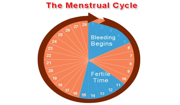 Every woman has a different menstrual cycle. The normal range for a woman