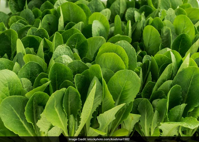 Oxalic acid or oxalate is found mostly in foods from plants like spinach, strawberries, wheat bran, nuts and tea. Avoiding these foods may help reduce the amount of oxalate in the urine.