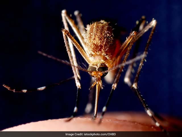 Photo : Malaria - a parasitic disease