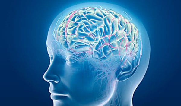 """A stroke or """"brain attack"""" occurs when the vessels supplying blood to the brain are blocked, interrupting the blood flow. This results in the death of the brain cells. Depending on the area of the brain involved and the extent of brain cell death, the specific body functions such as speech, movement or memory may be affected."""