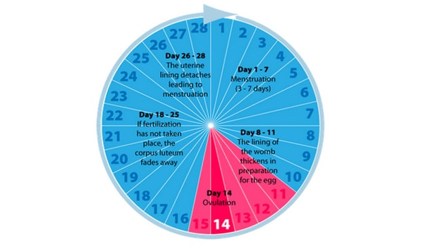 When To Have Intercourse During Fertile Days