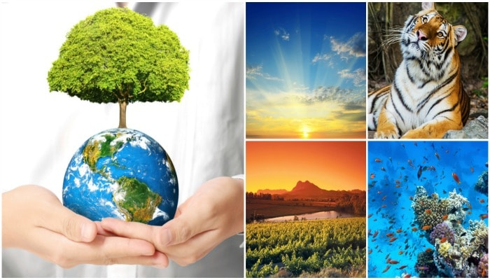 Photo : It's Environment Month: How Do You Plan To Save Your Planet?