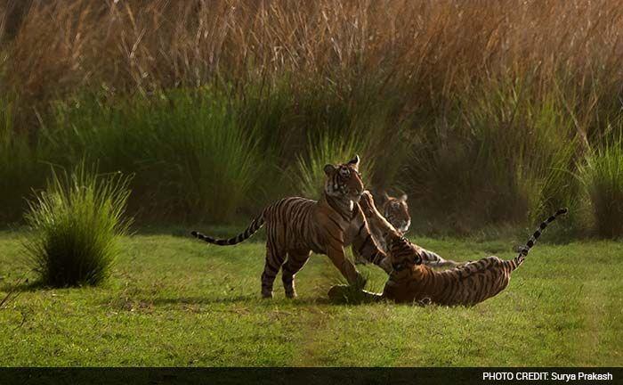 Join the Roar Contest Winner: Surya Prakash