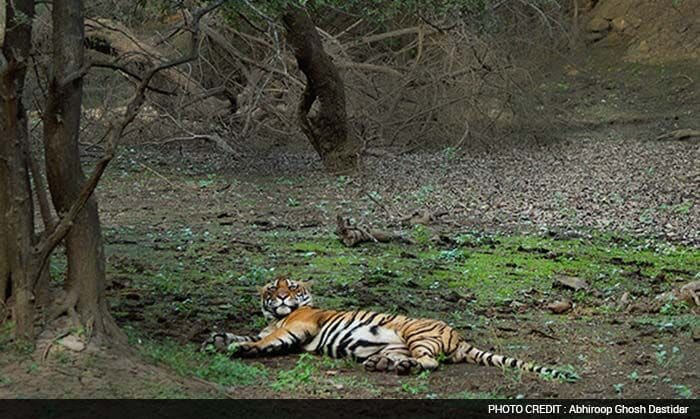 Save Our Tigers: Join the Roar Contest Shortlisted Entries