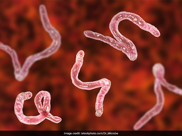 Photo : National Deworming Day: FAQs On Intestinal Worms Or Soil-Transmitted Helminths (STH) Infections