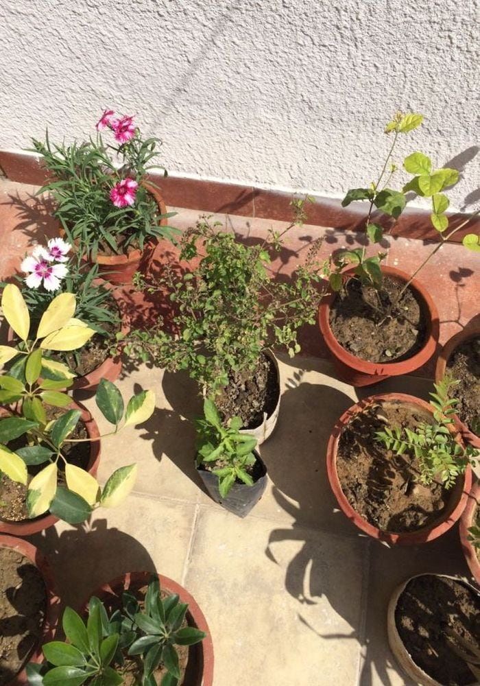 Get Rid Of Your Paper Waste In Exchange For Plants, This 39-Year-Old Noida Woman Shows How