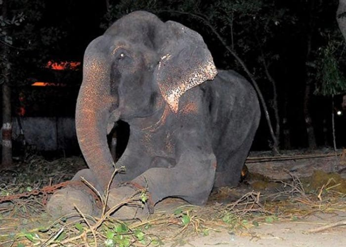Why Elephants Should Be Freed From A Life Of Captivity