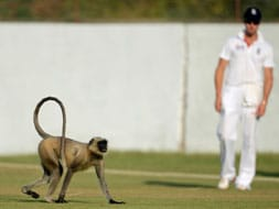 Photo : Images of the day: Langur in tour game, team India practices