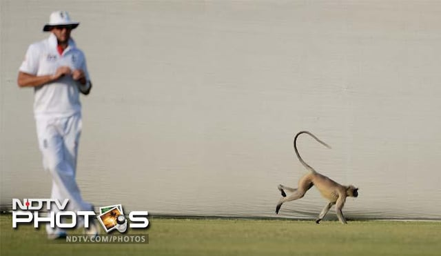 Images of the day: Langur in tour game, team India practices