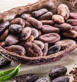 Cocoa Powder For Weight Loss: How To Consume This Delicious Food To Shed Kilos Faster