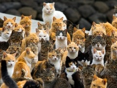 This Island in Japan is Home to 120 Cats and Just 22 Humans