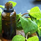 Oral Health: Use Peppermint (Mint) For Keeping Your Teeth And Gums Strong