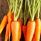 High Blood Pressure Management: 5 Winter Vegetables To Manage Hypertension