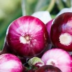 Diabetes Management: Here's How Onion May Help Manage Blood Sugar Levels