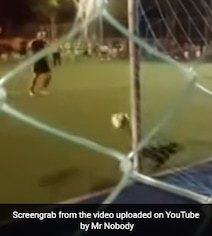 Every Dog Has Its Day. This One Just Saved A Penalty Kick. Watch