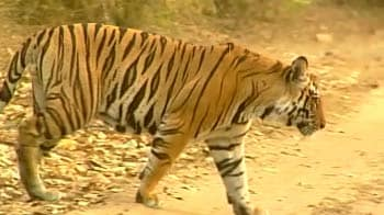 Video : Challenges for Corbett Tiger Reserve
