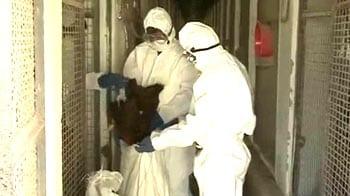 Video : Bird flu virus changing DNA, 6000 crows dead