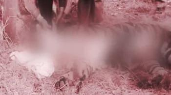 Video : The Panna turnaround