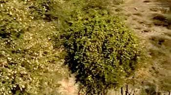 Video : Jodhpur's desert rock park comes alive