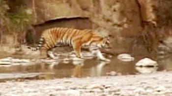 Video : Govt declares complete silence zone around Corbett Tiger Reserve